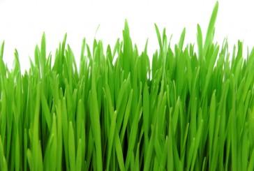 barley-grass-blog-image1-1024x685
