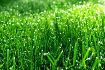 zielony-jeczmien-1024x576